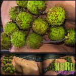 Release 12.08.2016 – Queensnake – GREEN BIKINI – Full HD-1080p, queensnake.com, Nazryana, lezdom, conkers, orgasm, whipping